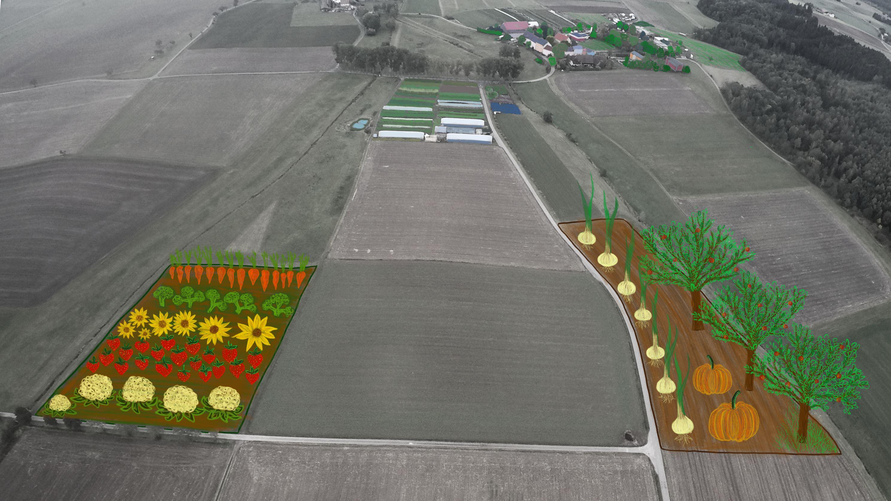 TH_Bodenkauf_Gemüse
